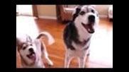 Говорещото куче Мишка - дует с малката й сестричка Лайкаа