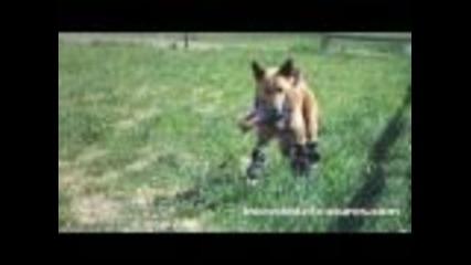 Първото куче в света с протези !!