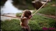 Малка маймунка си играе:)