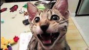 Котката с якия смях!
