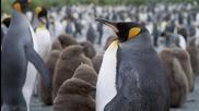 Кралят на пингвините (2012)