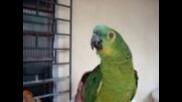 Папагал пее опера