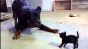 Малко Коте се Звери на Куче
