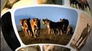 World Wild Web: X-factor / Световната животинска мрежа: Х фактор Bg Audio National Geographic