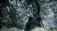 Старки - Волки уходят (игра престолов)