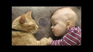 Nette Hunde und Katzen Schlafen Mit Babies Zusammenstellung [neue Ausgabe]