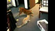 Куче и котенце си играят