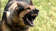 Релакс - среднощно лаене на куче