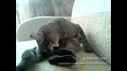 (смях до скъсване) Откачена котка си боксира главата (не е за изпускане)