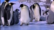 Пингвини падат
