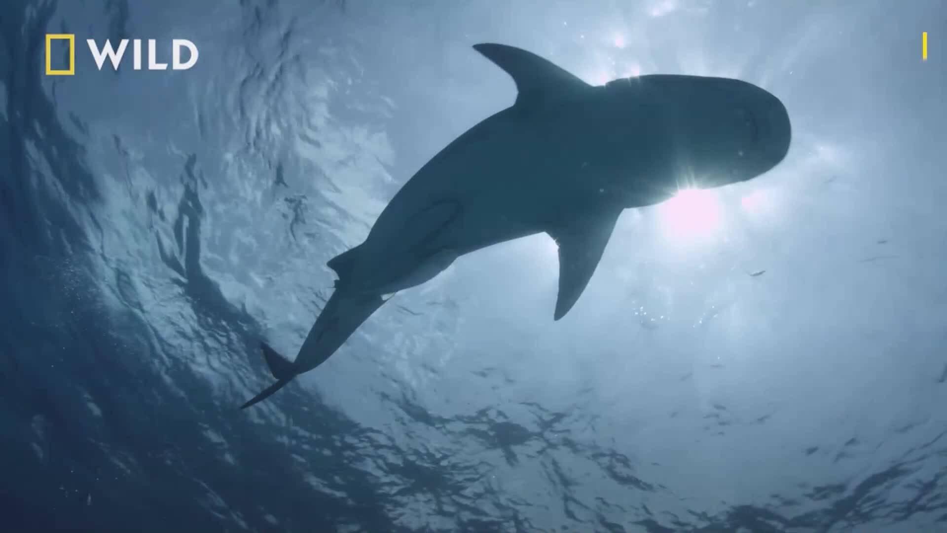 Факти за акулите