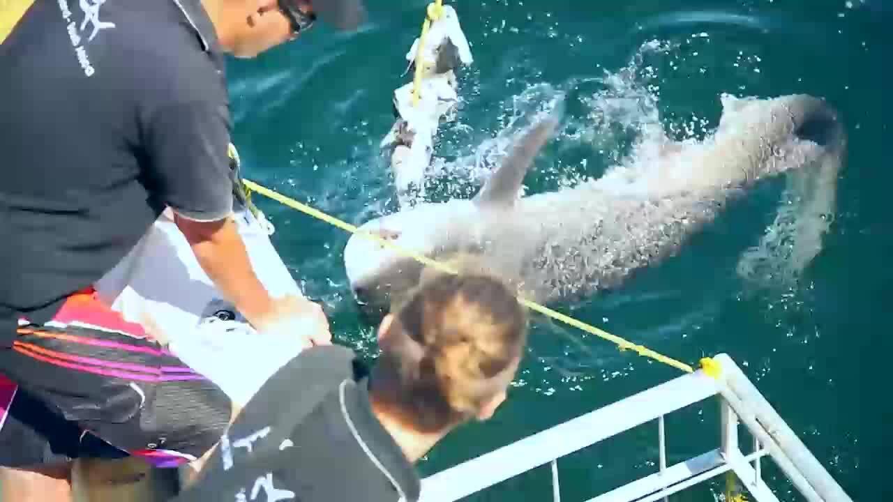 ЮАР Акули (Без багаж еп.222 трейлър).