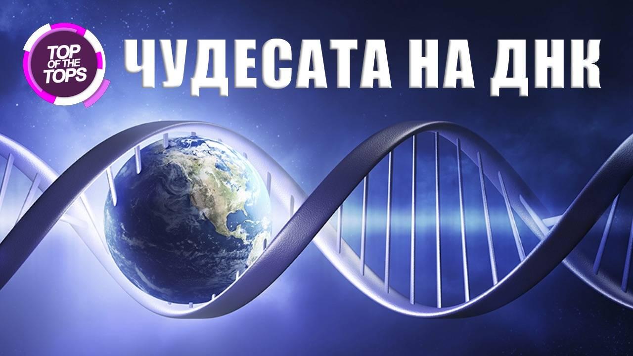 Топ 10 интересни факта за ДНК