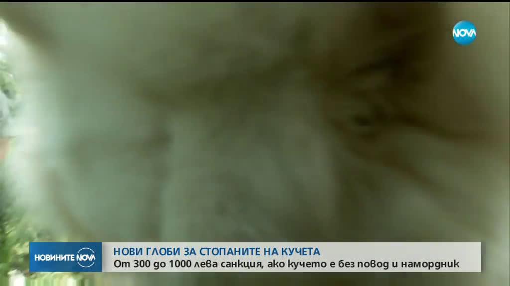 До 1000 лева глоба за куче без намордник