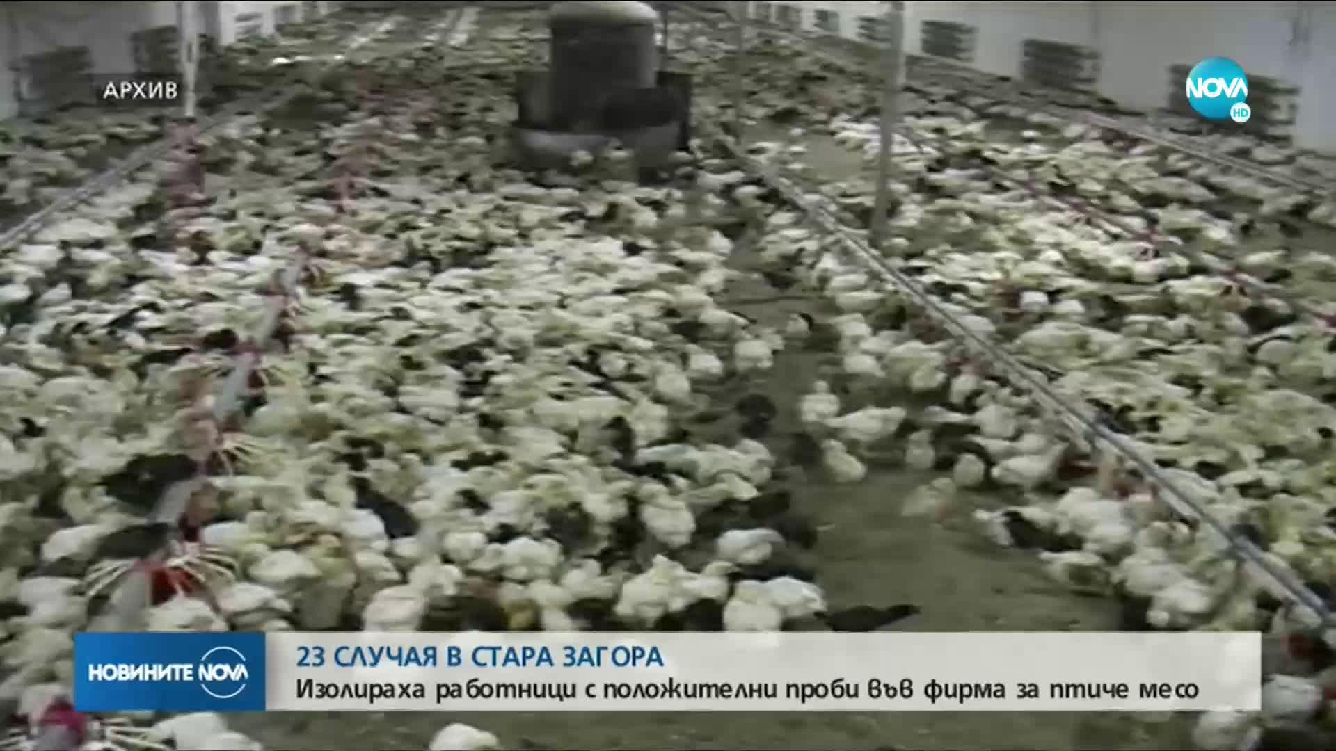23 положителни проби за COVID-19 в предприятие за птиче месо