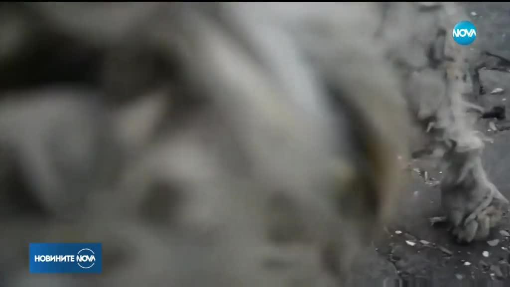 СЕДМИЦА СЛЕД ОГНЕНИЯ АД В АТИНА: Откриха живо куче в изгоряла къща