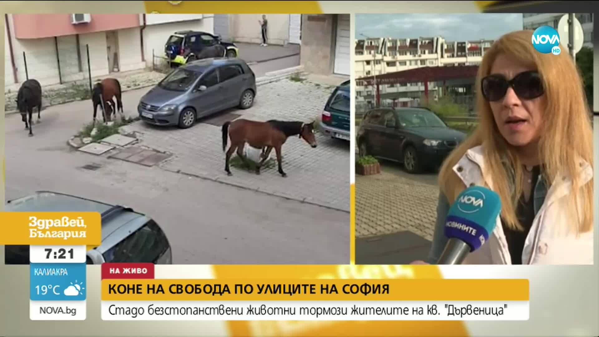 """""""Пълен абсурд"""": Стадо безстопанствени коне тормози жителите на кв. """"Дървеница"""""""