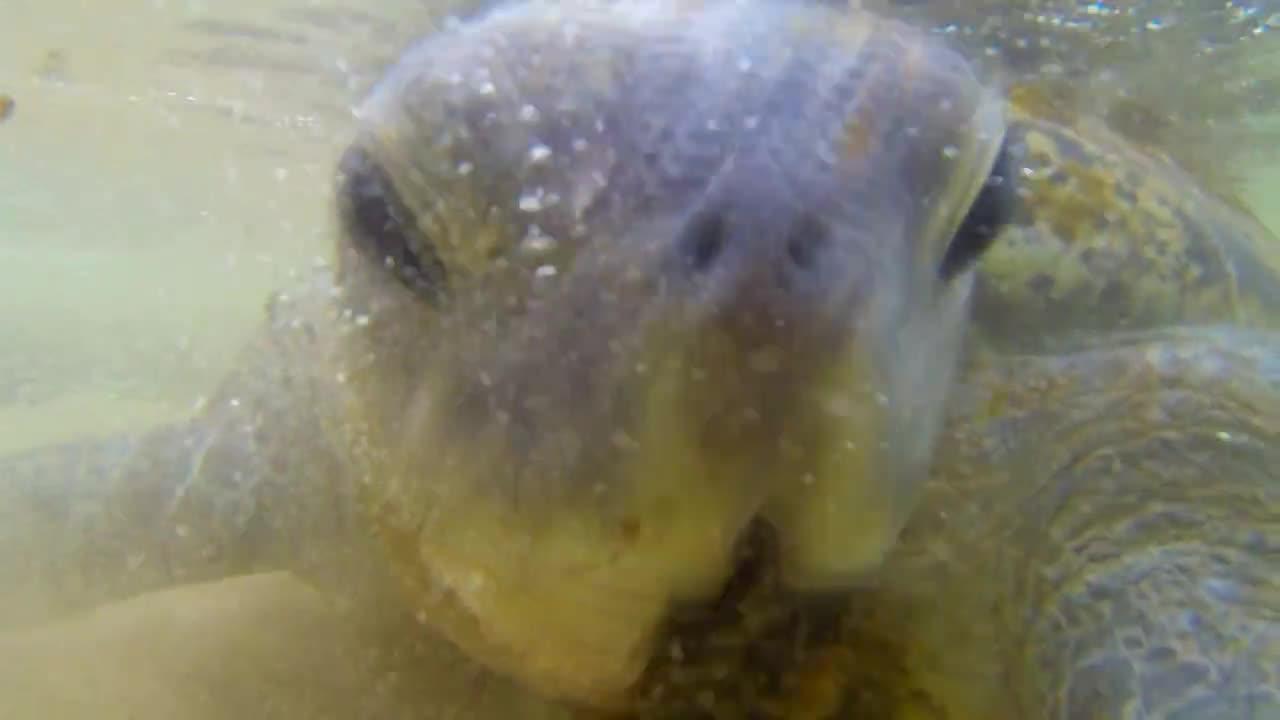 """Гигантска морска костенурка се сприятелява с дете (""""Без багаж еп.40 трейлър)"""