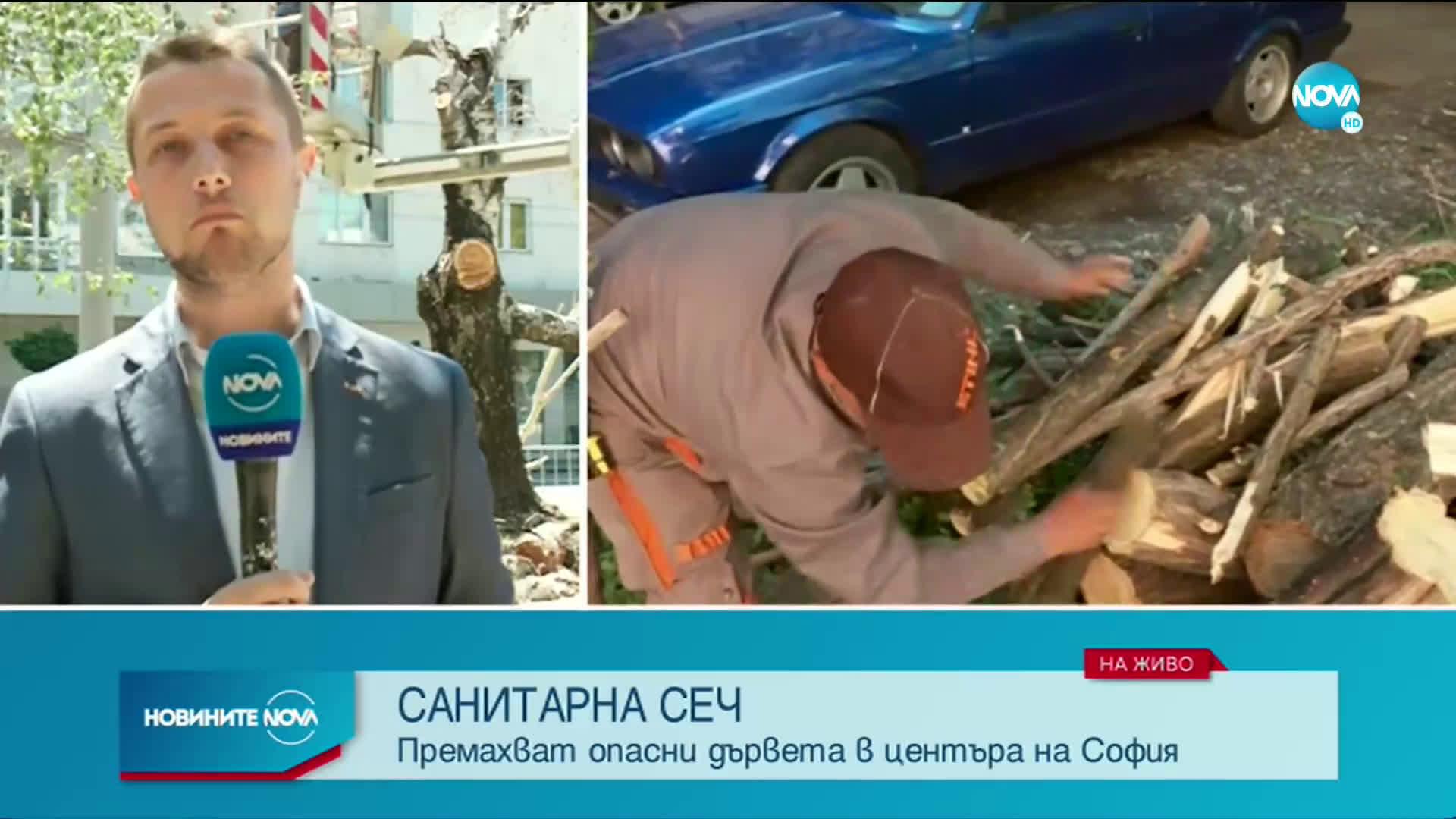 Премахват опасните дървета в София