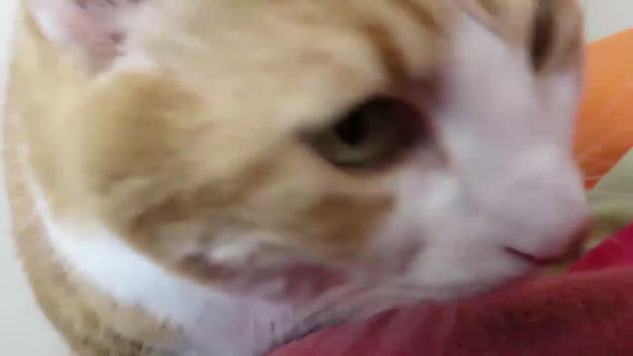 Котка събужда авторитетно (избор на Radio VOX за 11-ти февруари)