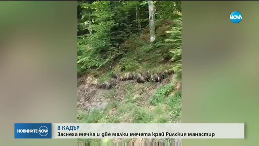 Заснеха мечка с две мечета под Рилския манастир