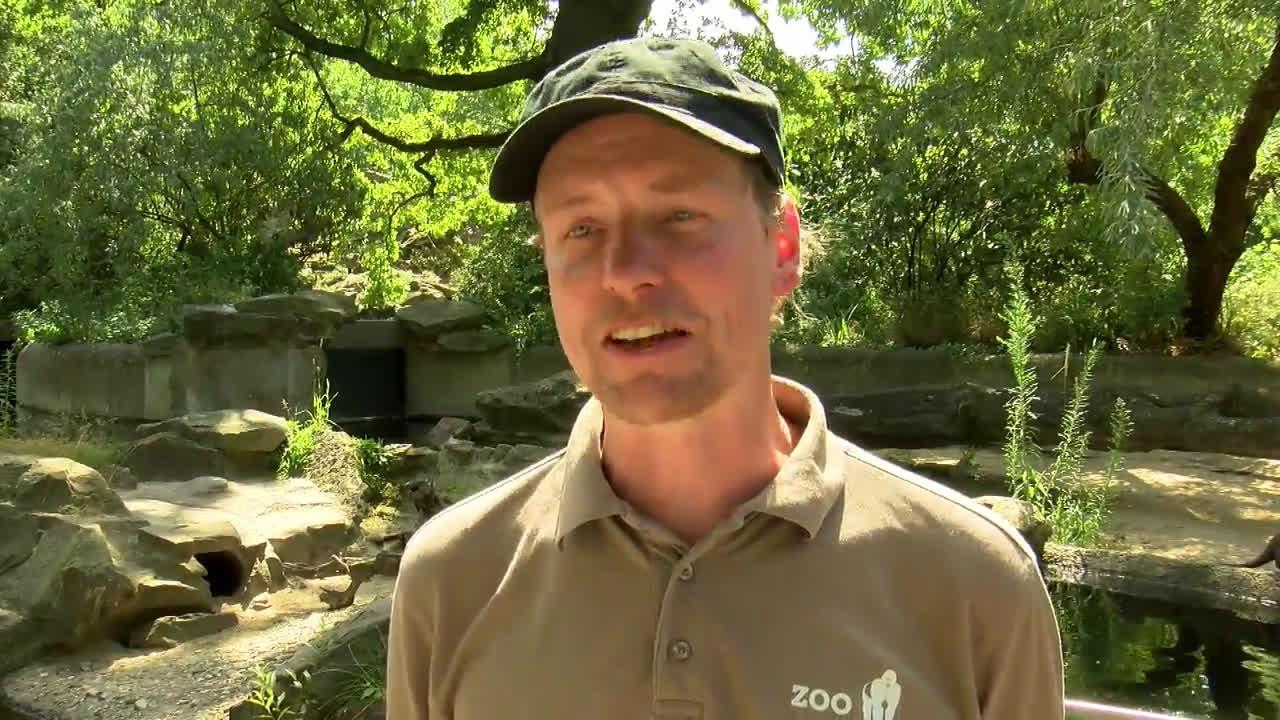 Berlin Zoo animals keep it cool in intense heat with help of frozen treats