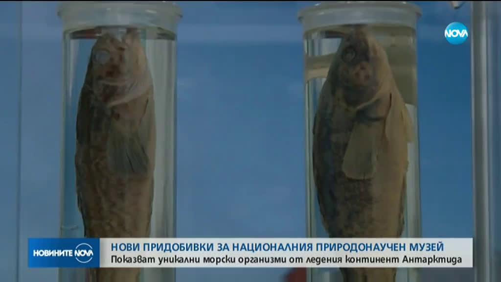 Уникални морски организми от Антарктида на изложба в София