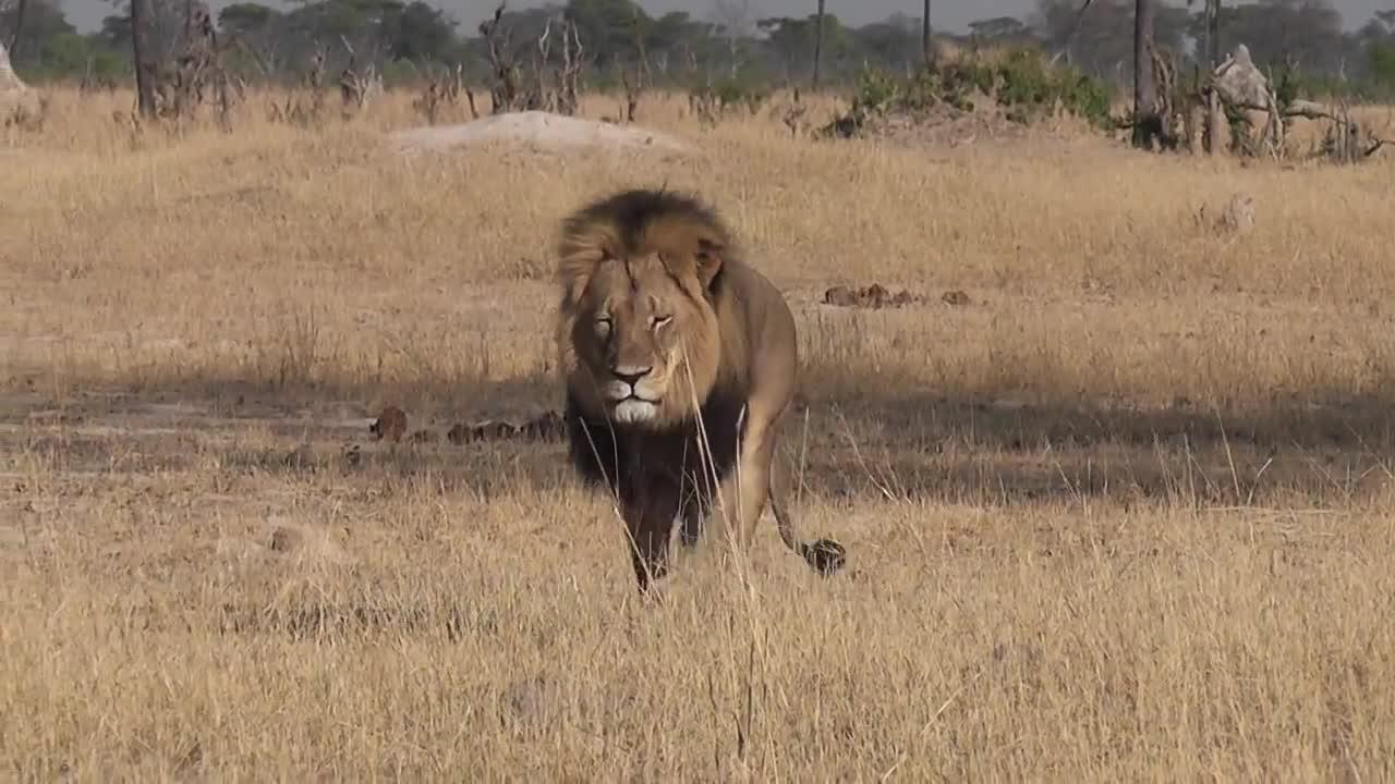 Сесил - гордостта на Зимбабве