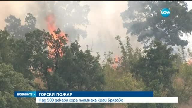 Овладян е пожарът, който гореше на метри от къщите в Брягово