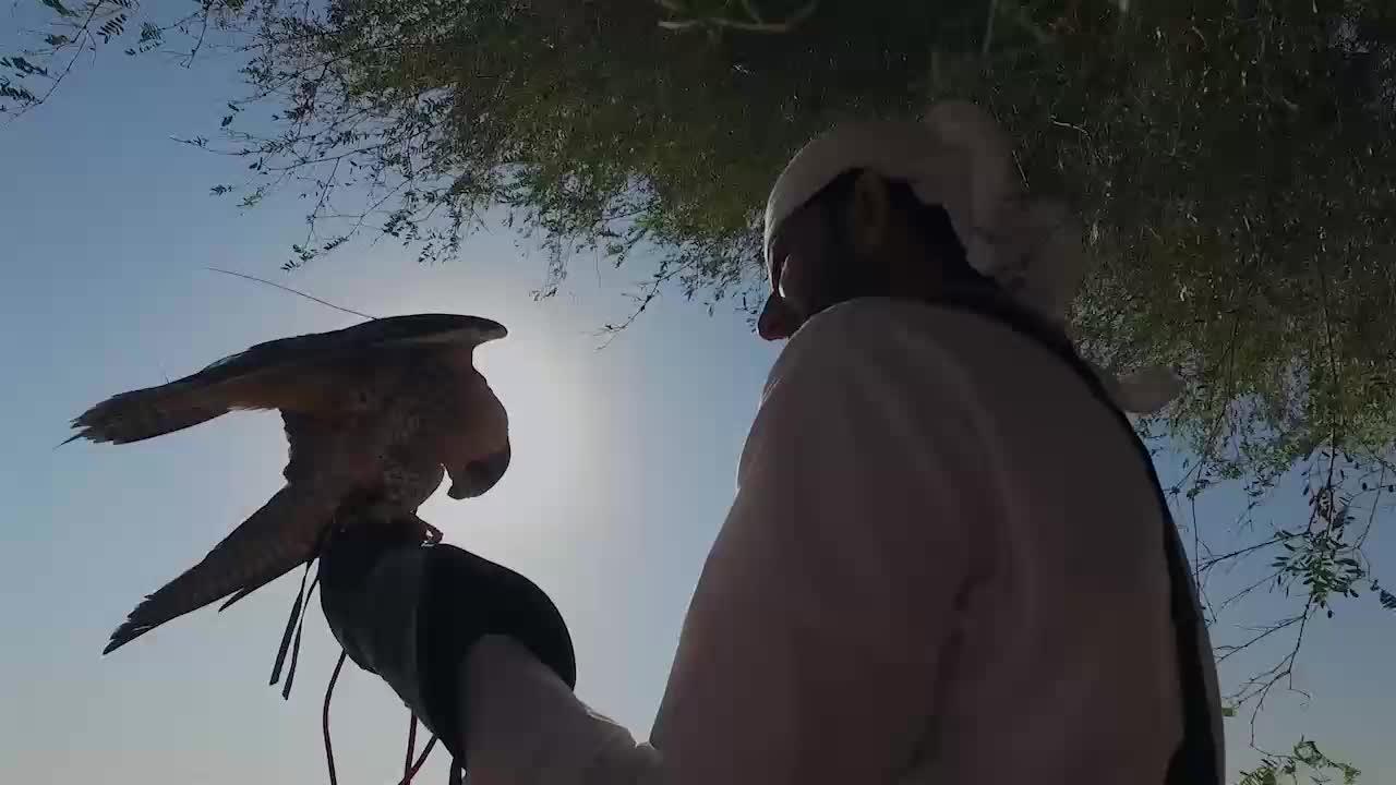 """Състезания със соколи в пустинята на Обединените Арабски Емирства (\""""Без багаж\"""" еп.149 трейлър)."""