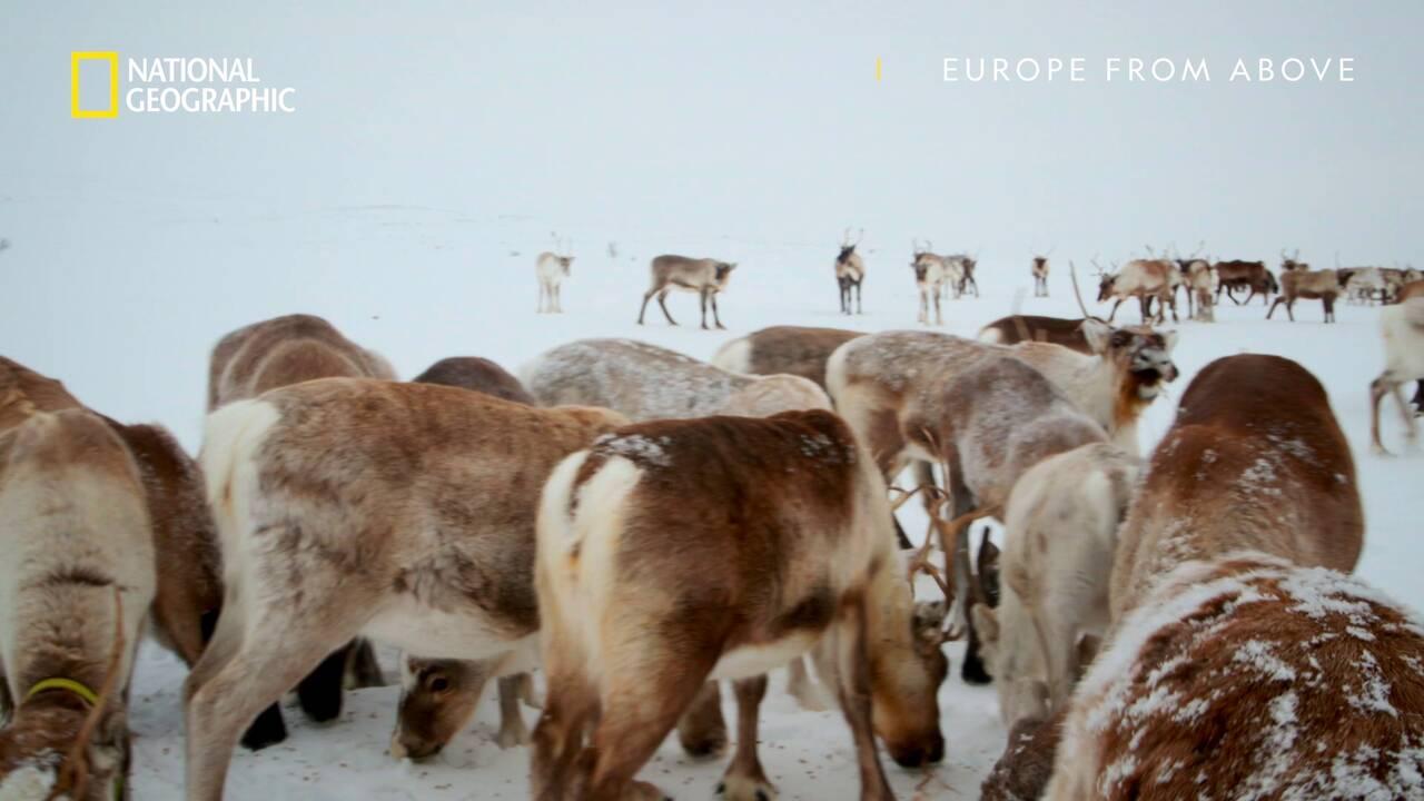 Северните елени във Финландия | Европа отвисоко | National Geographic Bulgaria