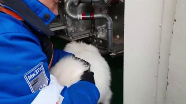 Руски моряци спасиха куче, заседнало в плаващи ледове