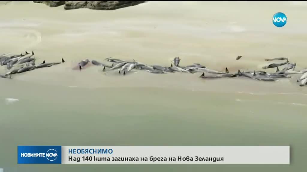 Повече от 140 кита загинаха на брега на остров в Нова Зеландия
