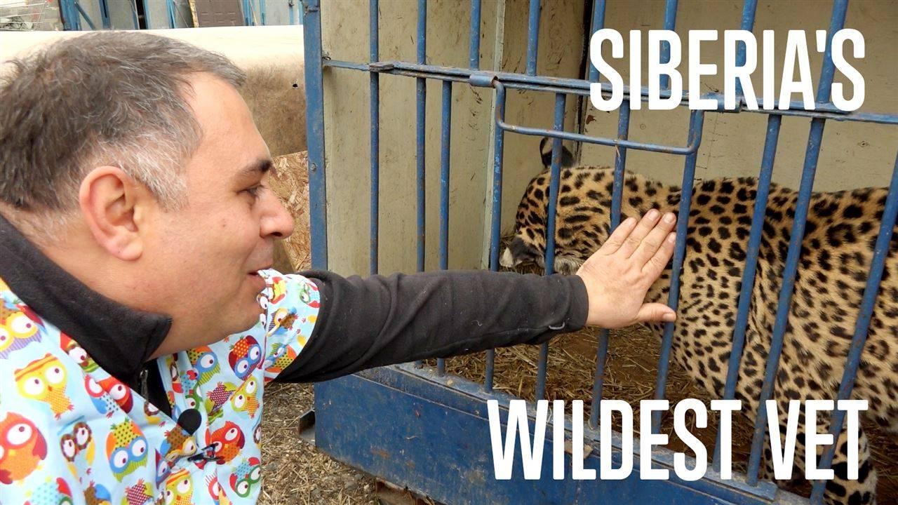 Втори шанс за дивите животни
