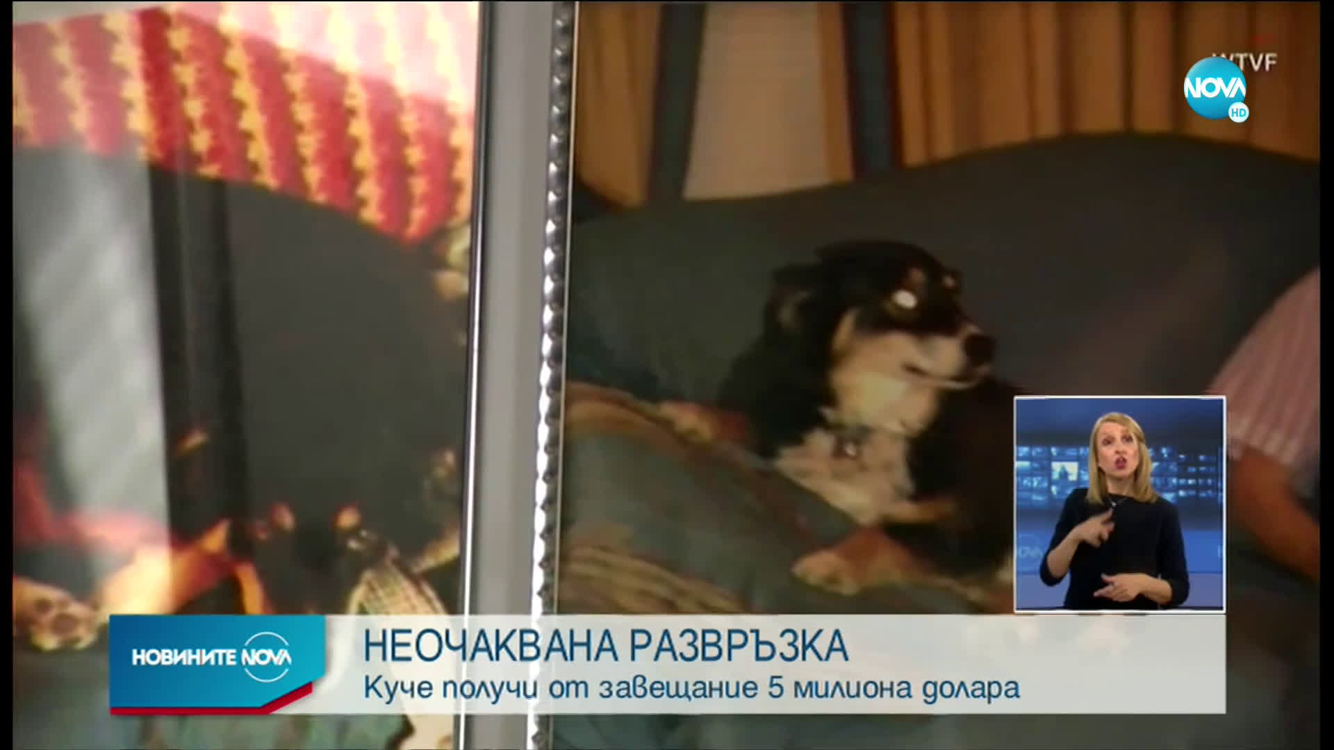 Куче получи от завещание 5 милиона долара