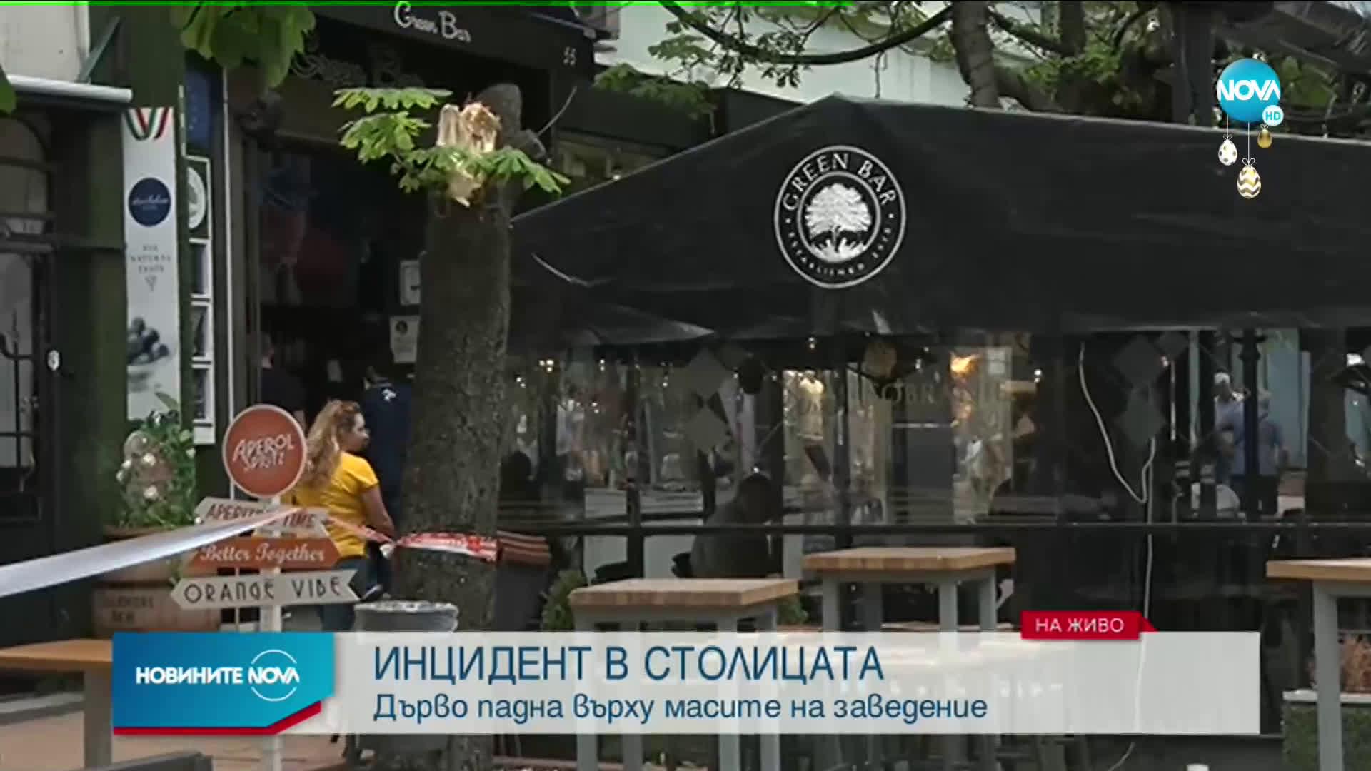 Дърво падна върху маси на заведение в центъра на София