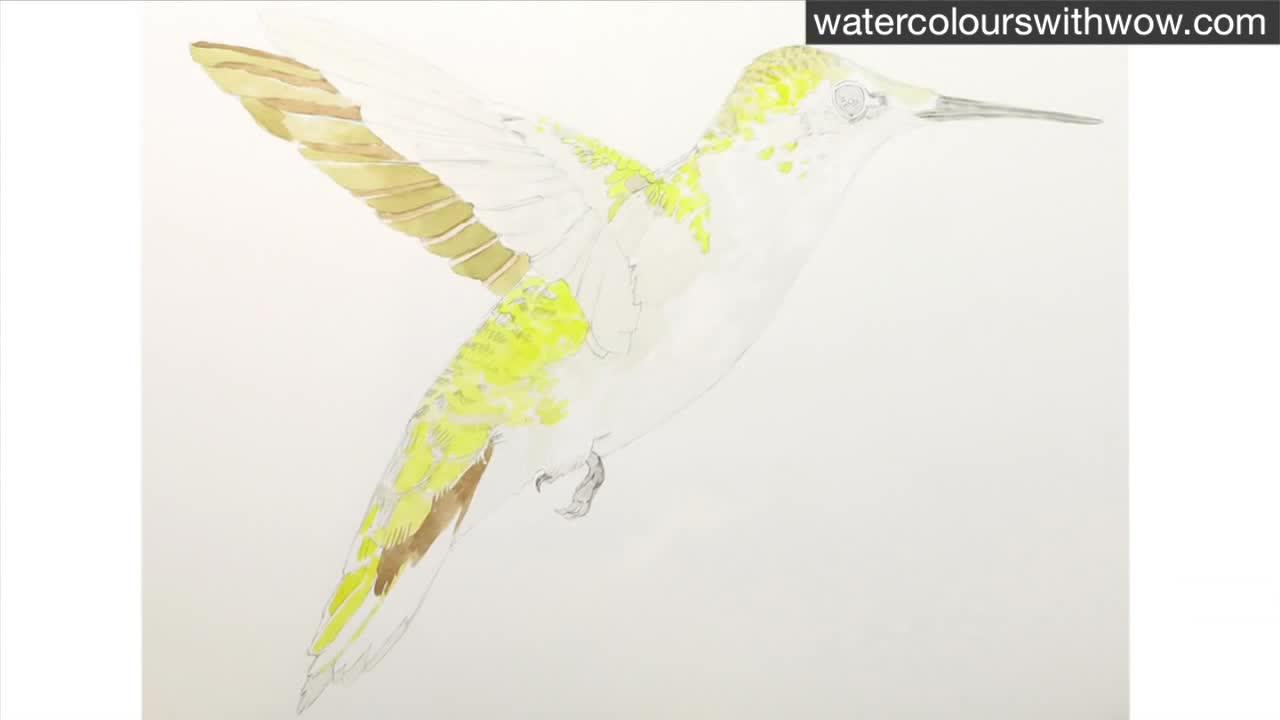 Как да нарисуваме колибри с 3 D ефект използвайки акварел /урок от Anna Mason/