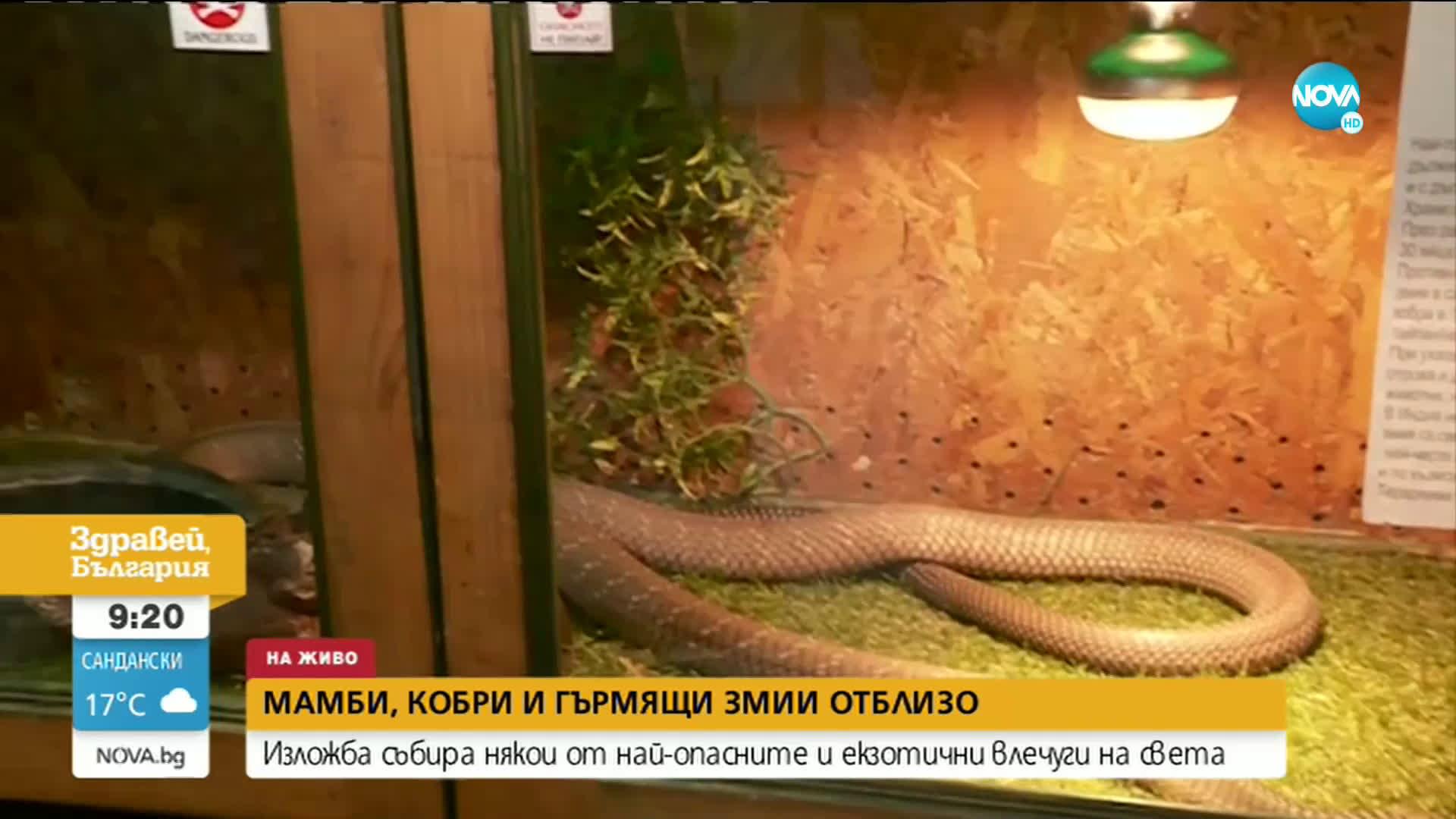 Изложба събира най-опасните и екзотични влечуги в света