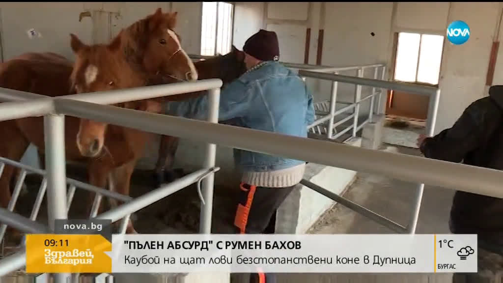 ПЪЛЕН АБСУРД: Каубой на щат лови безстопанствени коне в Дупница