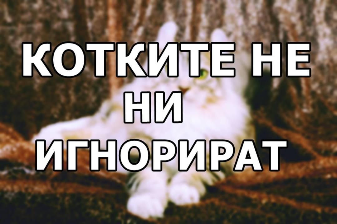 Котките не ни игнорират доказва изследване