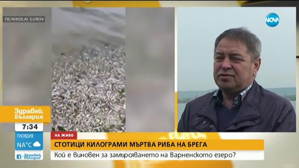 Откриха стотици килограми мъртва риба на брега на Варненското езеро