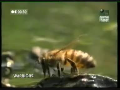 Животински воини - Битката за оцеляване
