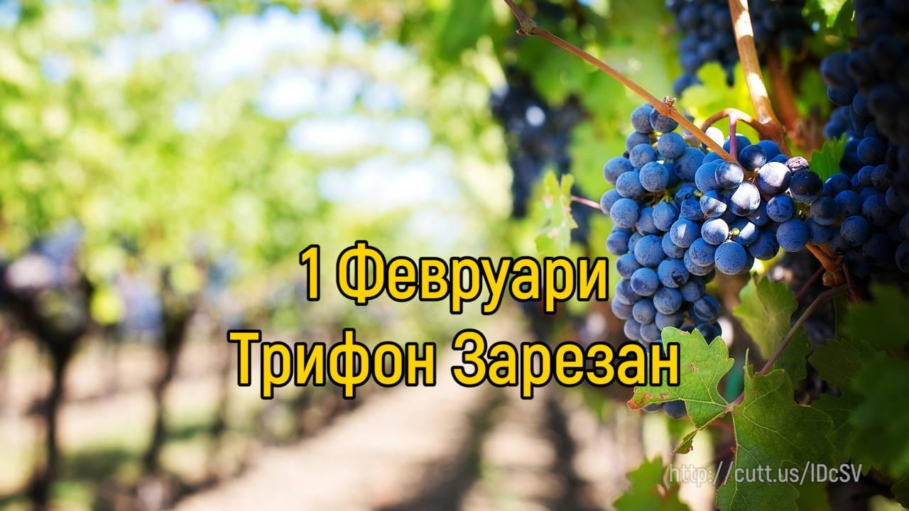 1 Февруари - Трифон Зарезан (Ден на лозаря)