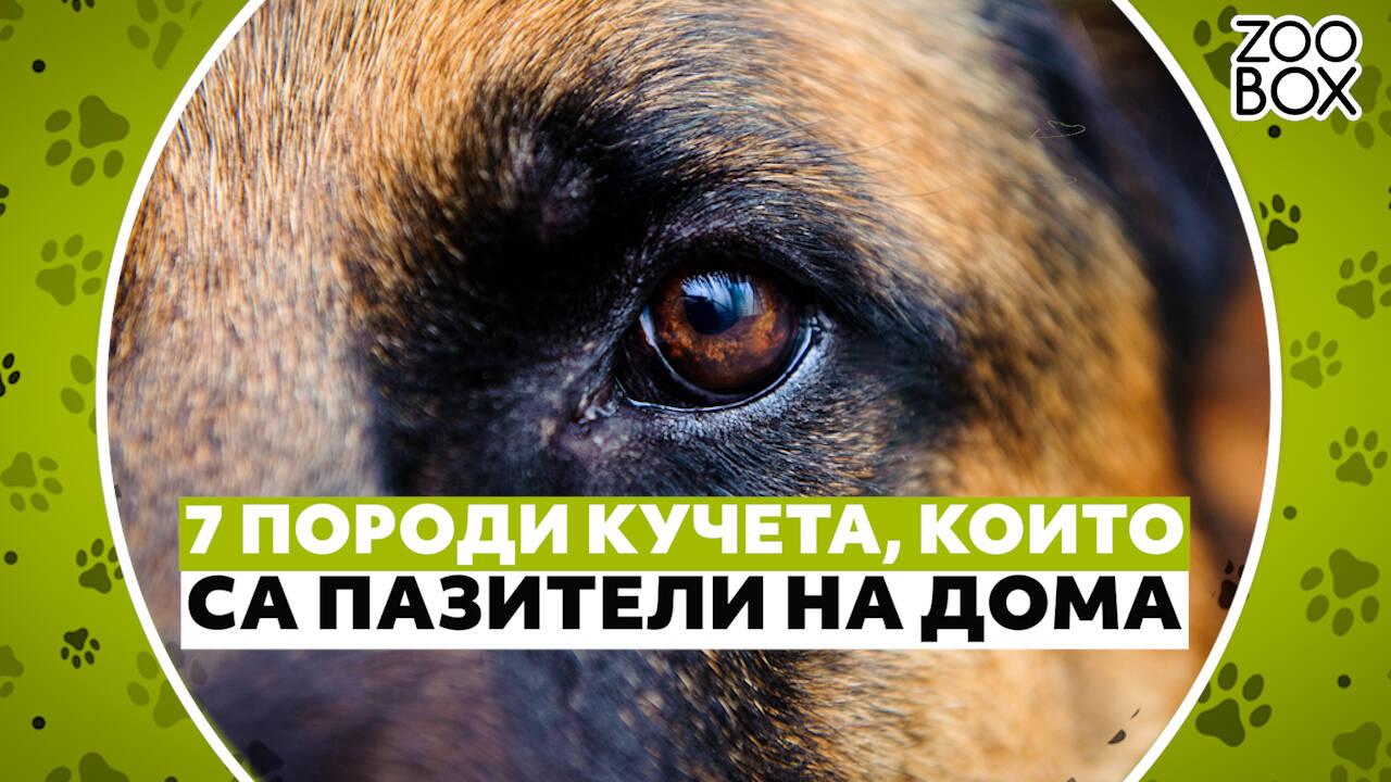 7 породи кучета, които са пазители на дома