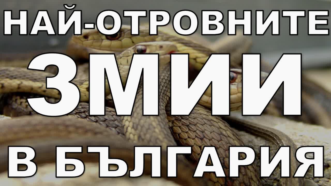Най-отровните змии в България