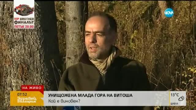 """В парк """"Витоша"""" са разместени морени, призна експерт"""