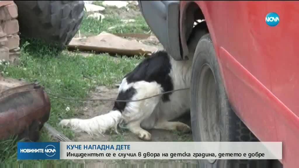 Домашно куче нахапа дете в двора на детска градина