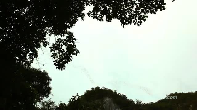 Gunung Mulu - Национален парк Малайзия
