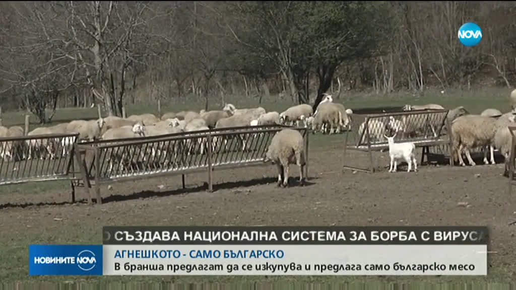 ПРЕДЛОЖЕНИЕ: Агнешкото на пазара да е само от български производители
