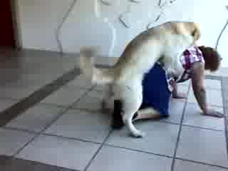 Секс на жени с кучета видео